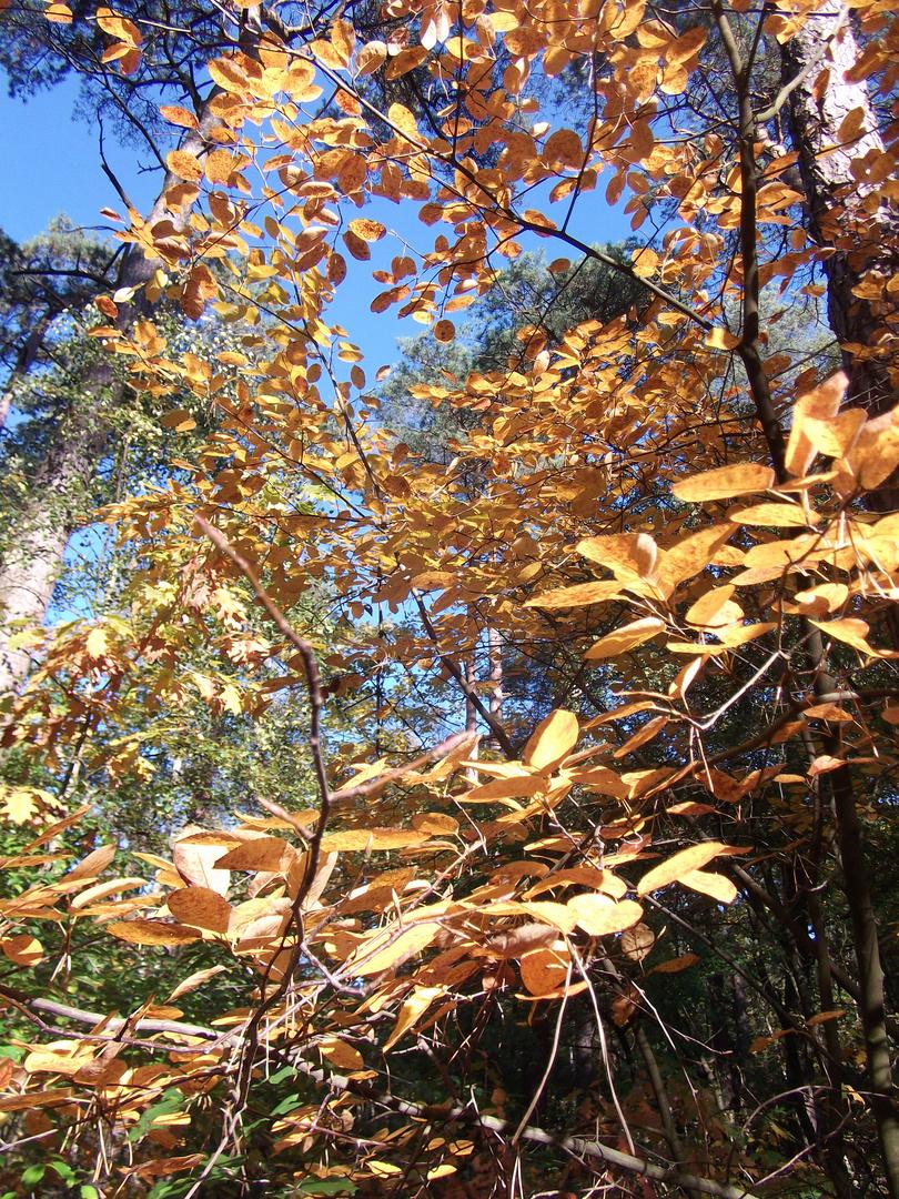 Mattiss,Bäume Herbst1