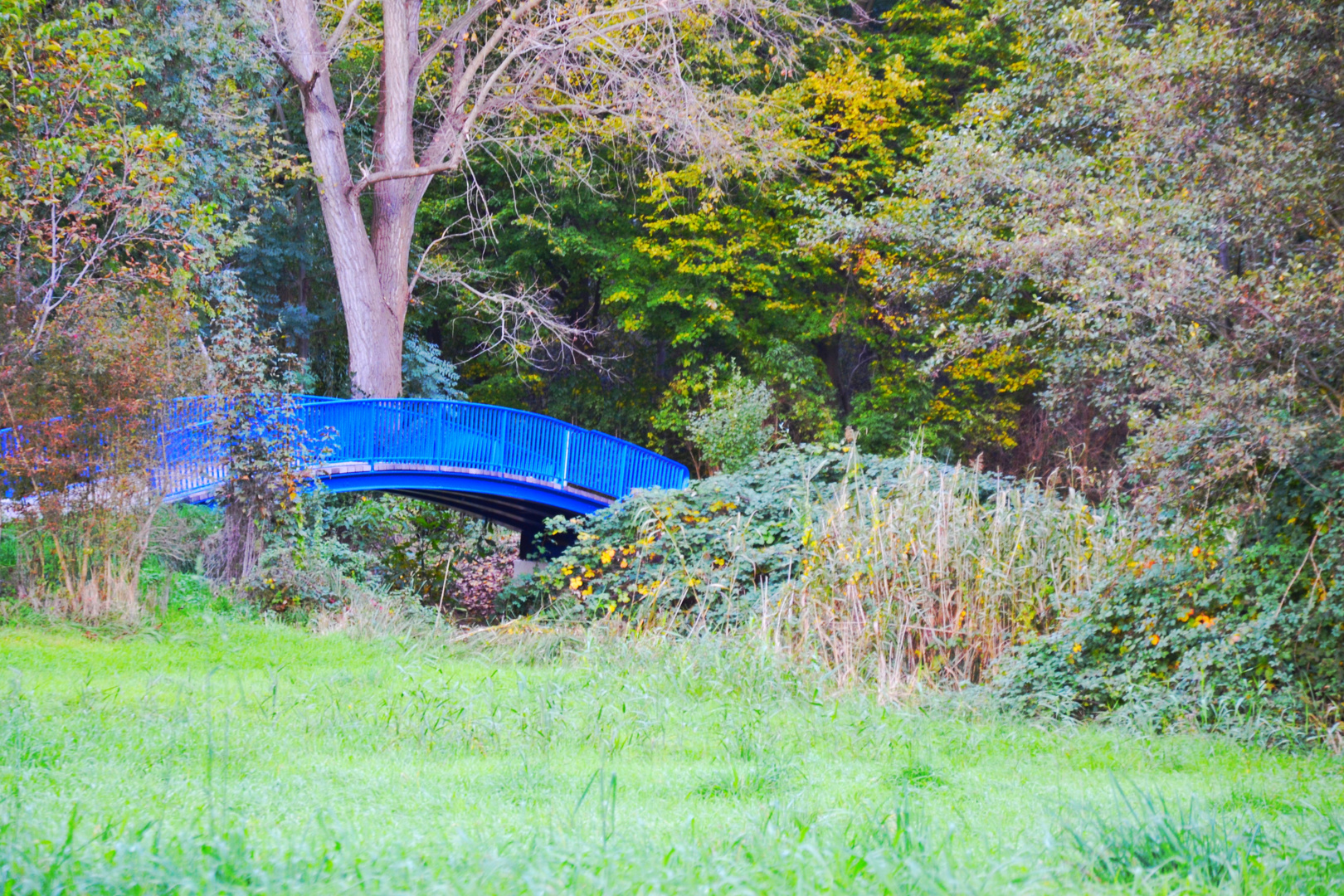 Maudacher Bruch - Blue Bridge - Ludwigshafen