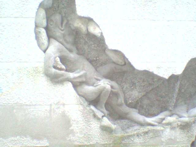 mauer frosch