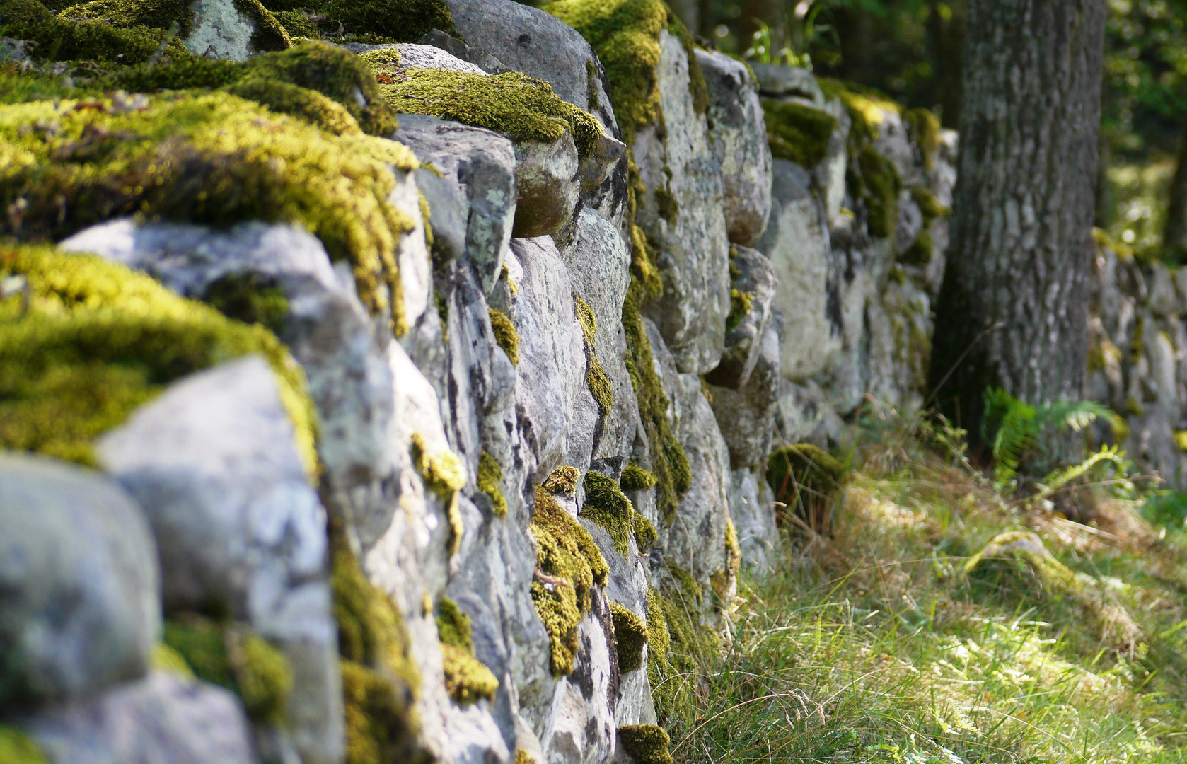 Mauer im Wald