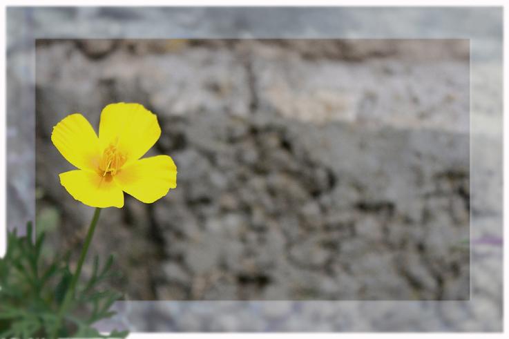 Mauerblümchen
