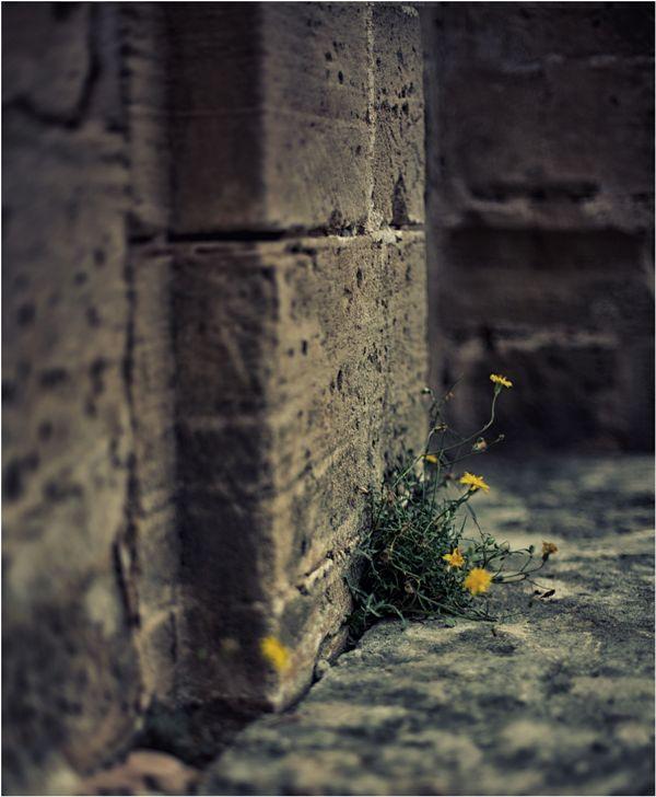 - Mauerblümchen -
