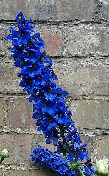 Mauerblümchen II