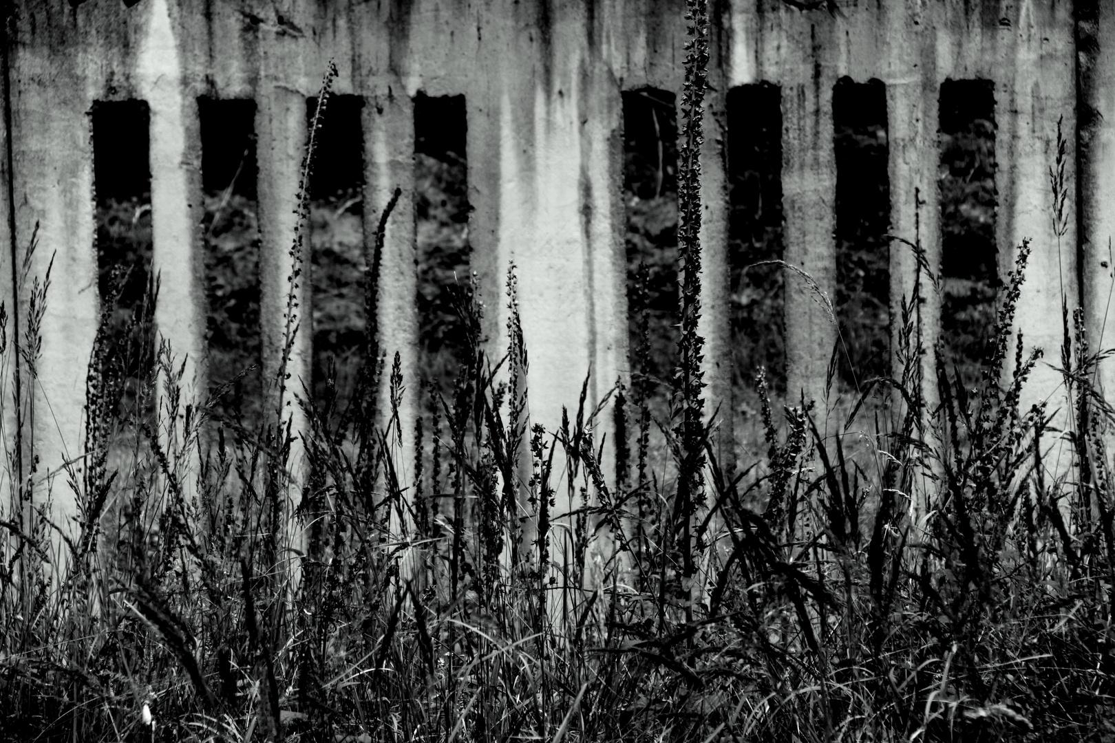 Mauerblumen