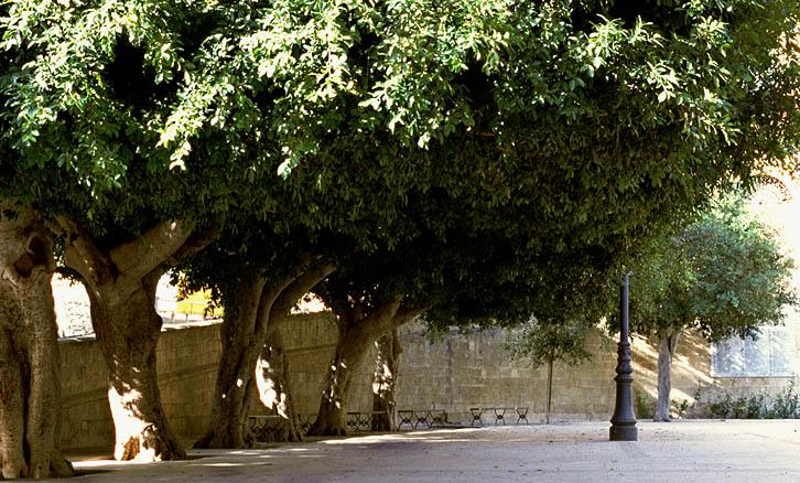 Maulbeerbaum-Platz in Noto (Sizilien)