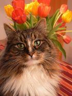 Maurice mit Tulpen