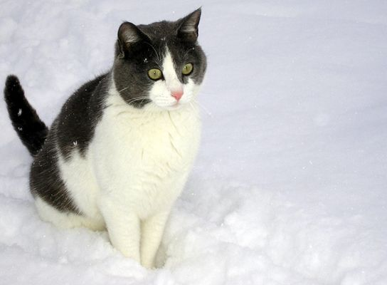 Maurice - mon petit boule de neige