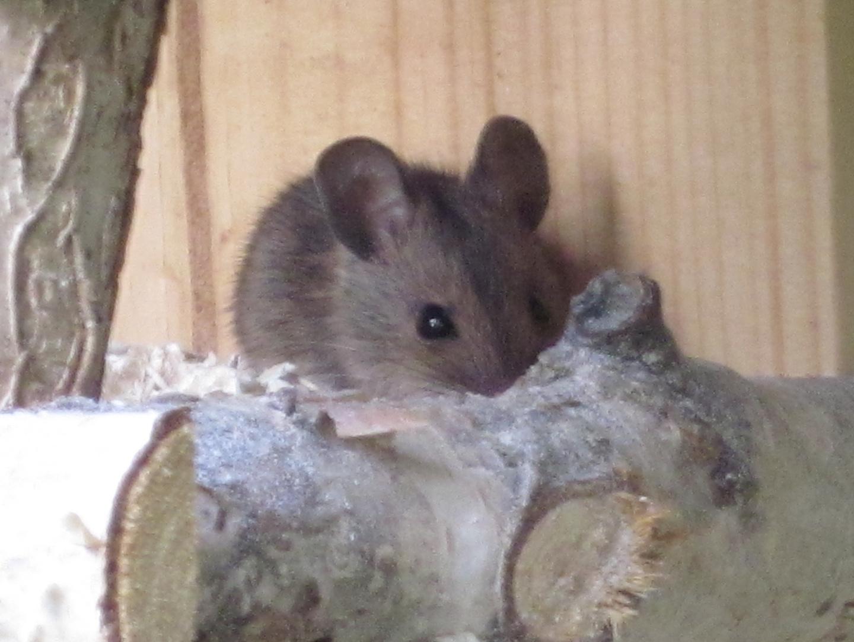... Maus im Vogelhaus ...