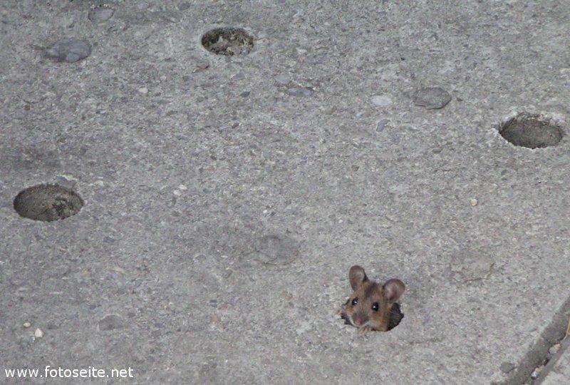 Maus in der Münchner Innenstadt