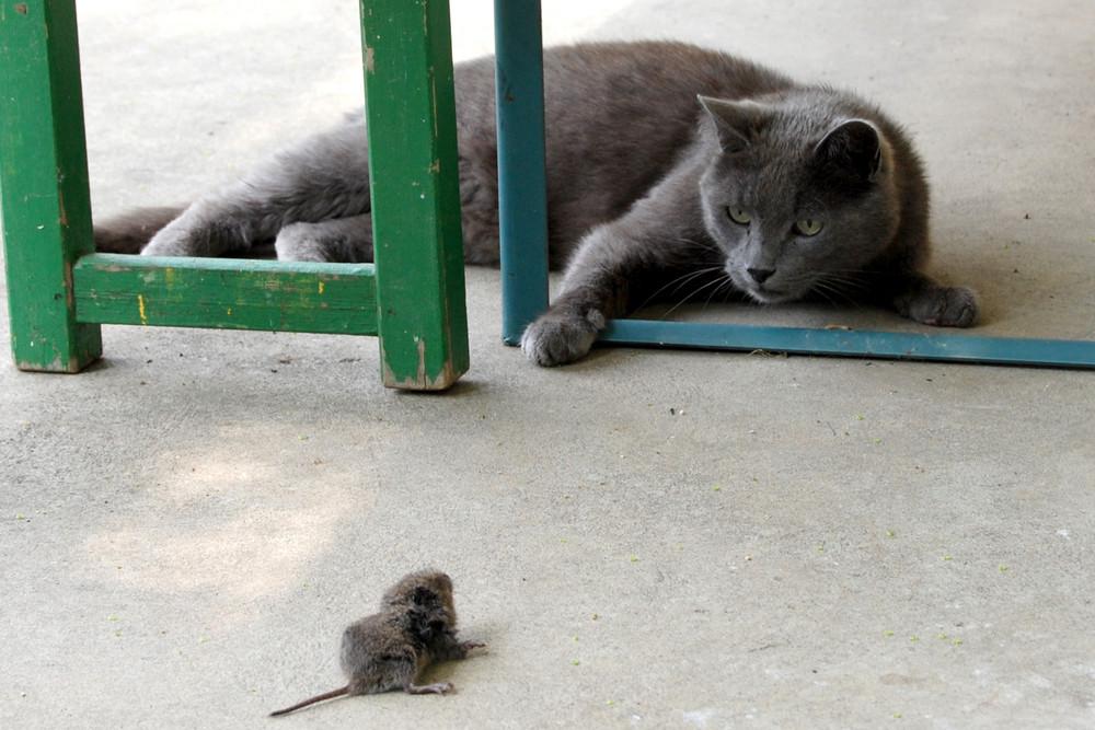 Maus und Katz...