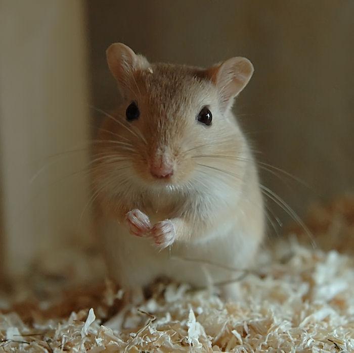 Maus zu Haus