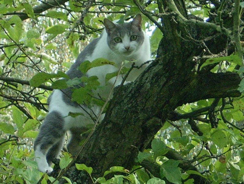 Mausi auf dem Apfelbaum