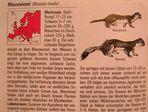 Mauswiesel Info