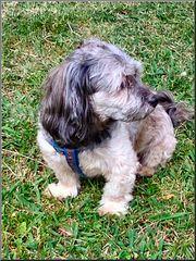 Max, il mio nuovo vicino cane.