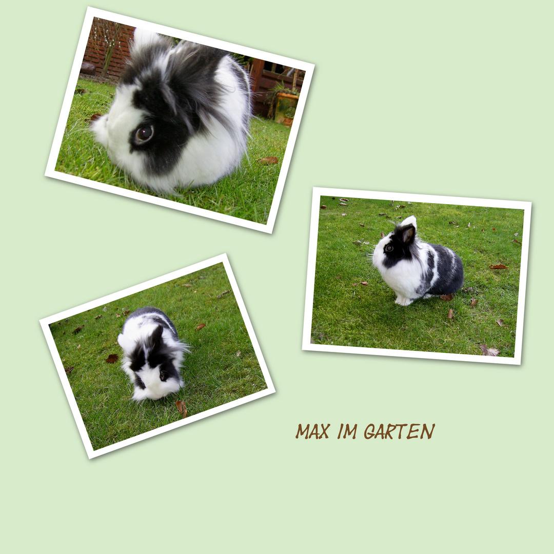 Max im Garten