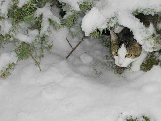 Max im Winter