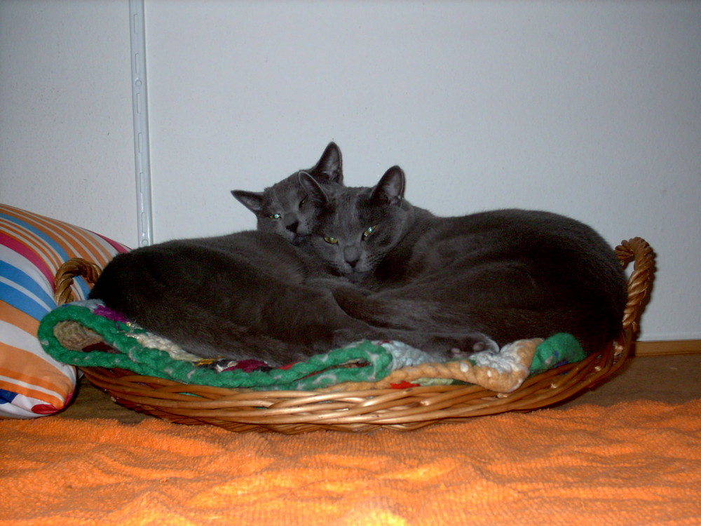 Max und Moritz beim Relaxen
