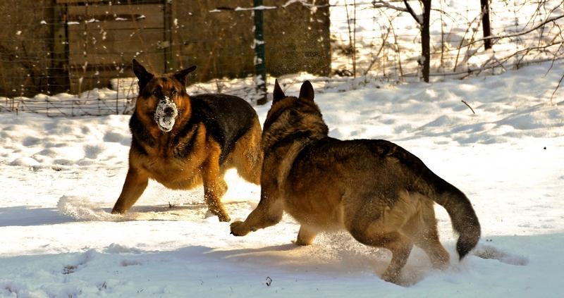Max und Moritz im Schnee (2)