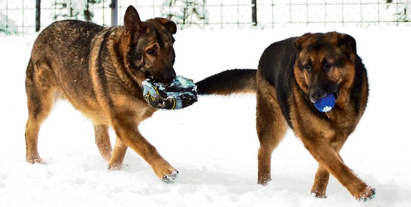Max und Moritz im Schnee