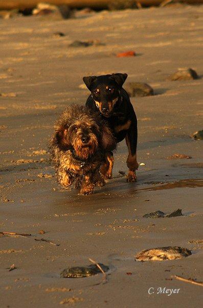 Max und seine Bessy schon wieder