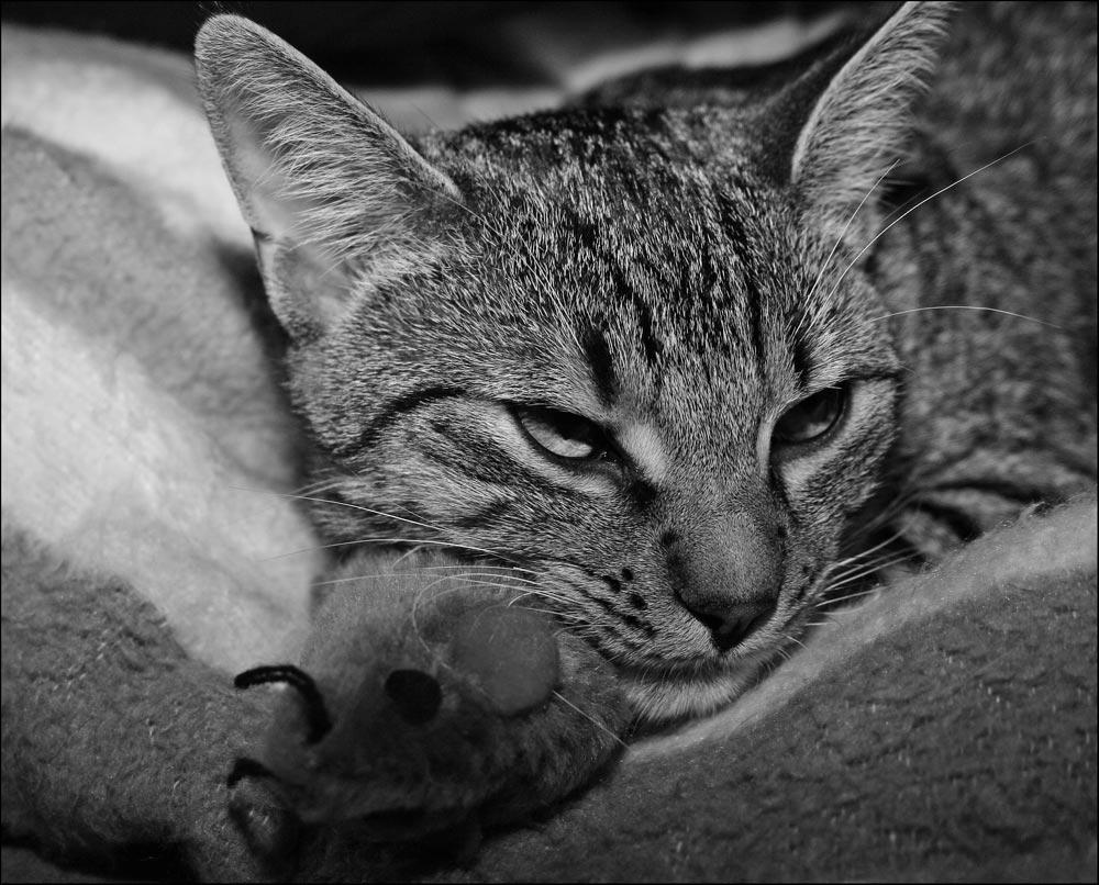 Max und seine Maus