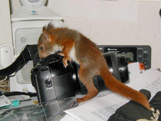 Maxi bei der Büroarbeit