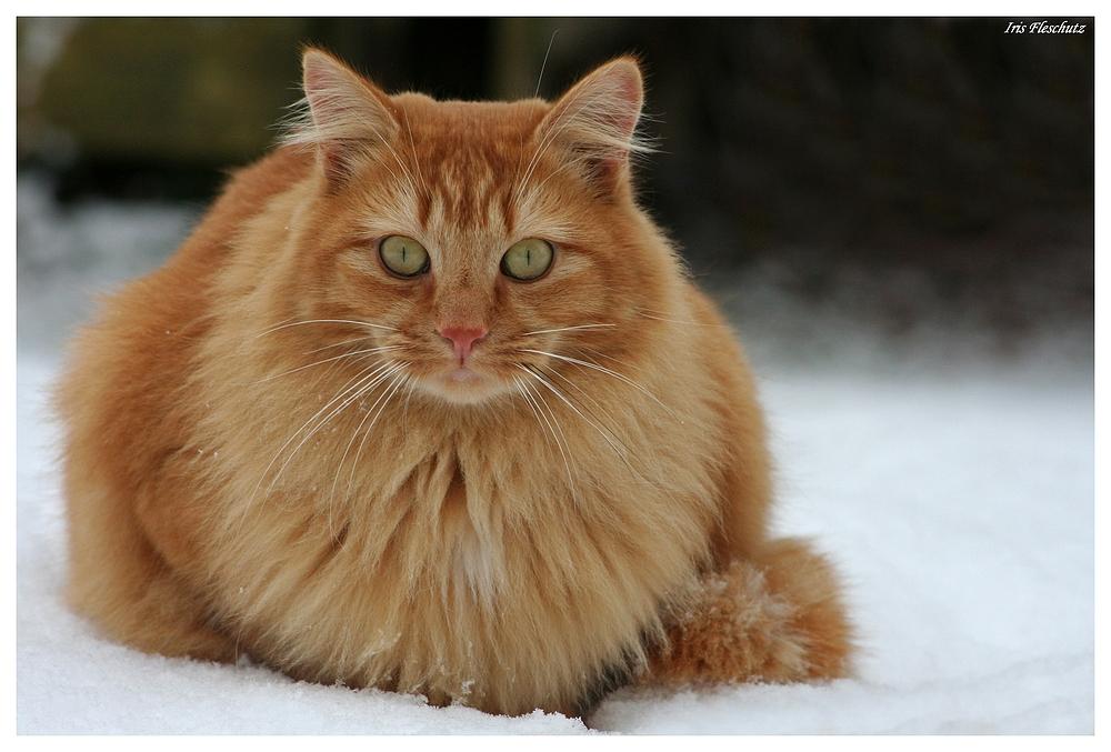 Maxi im Schnee