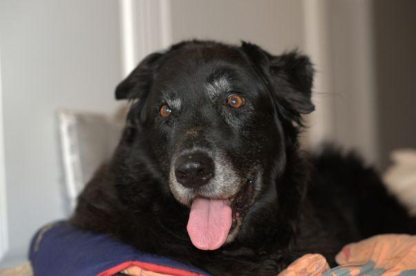 MAXIE unser Hund