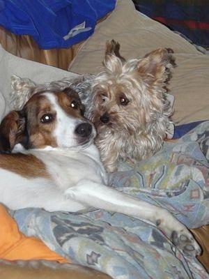 Maxou et Jack
