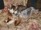 Maxou et Poussy dorment à deux.