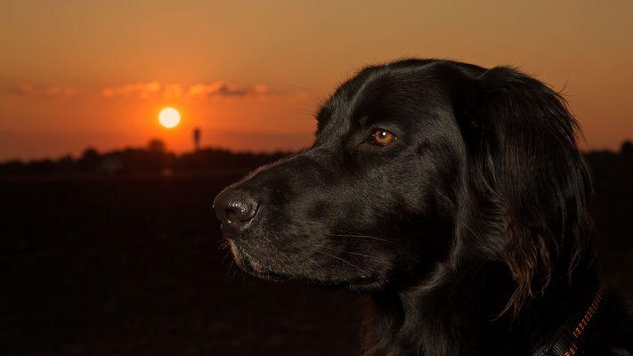 Maxx Sunset
