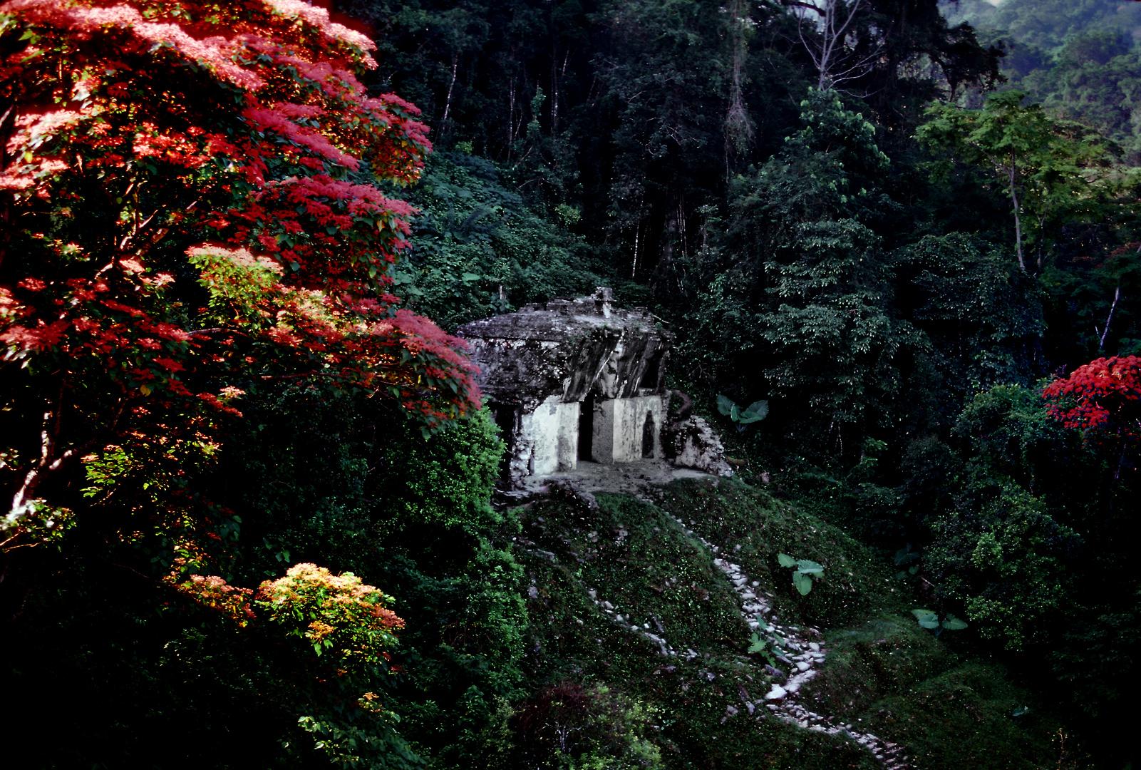Maya Ruine Im Urwald von Palenque