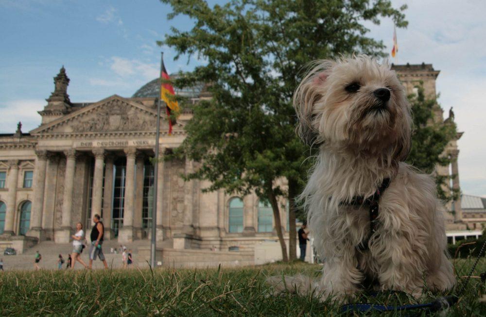 Mayla und das Parlament