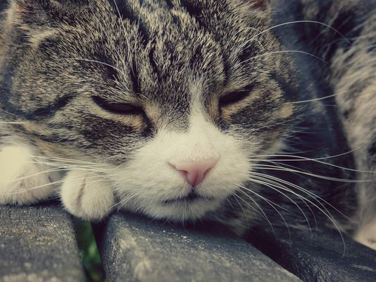 Âme endormie