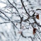 âme hivernale