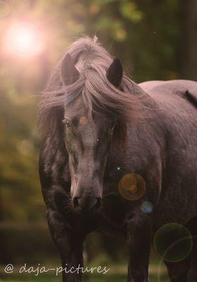 Meadow .... selten so ein fotogenes Pony vor der Kamera gehabt