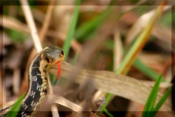 Mechant Serpent
