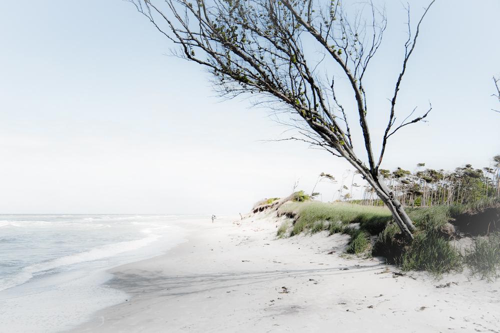 Meck-Beach