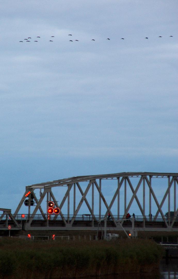 MecPom: Kraniche über der Meiningenbrücke bei Barth