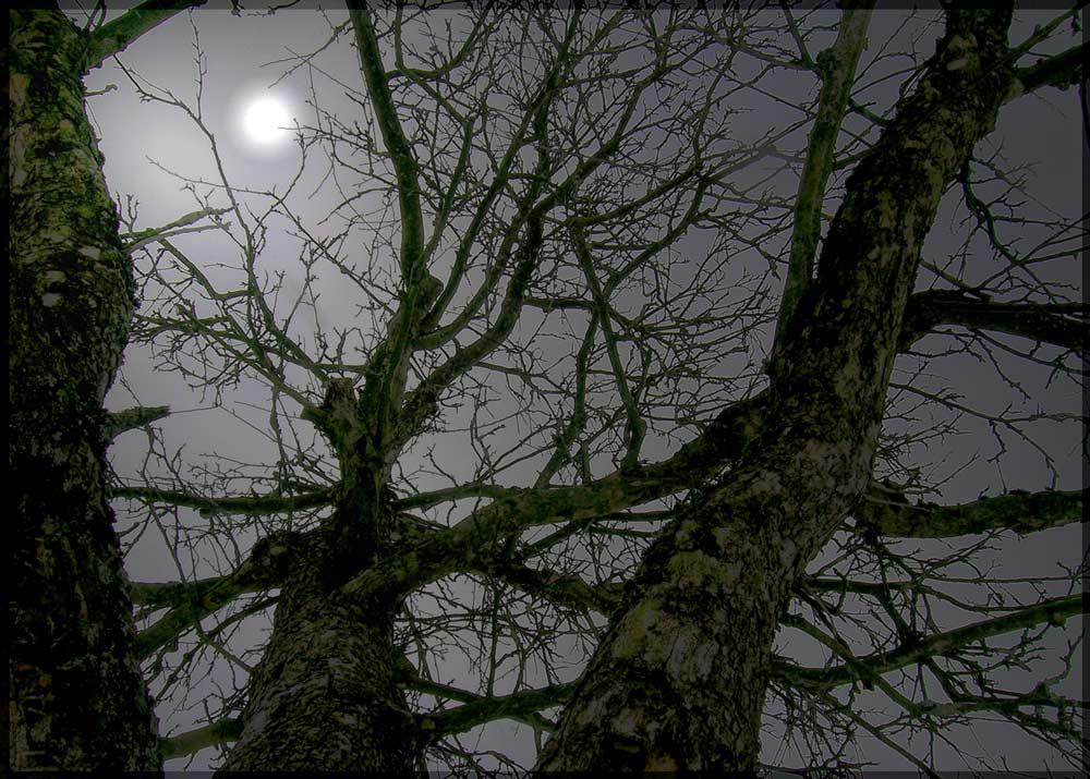 """Medienwahrheit oder """" der geheimnisvolle Apfelbaum""""..."""