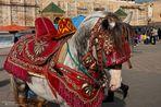 Medina - geschmücktes Pferd