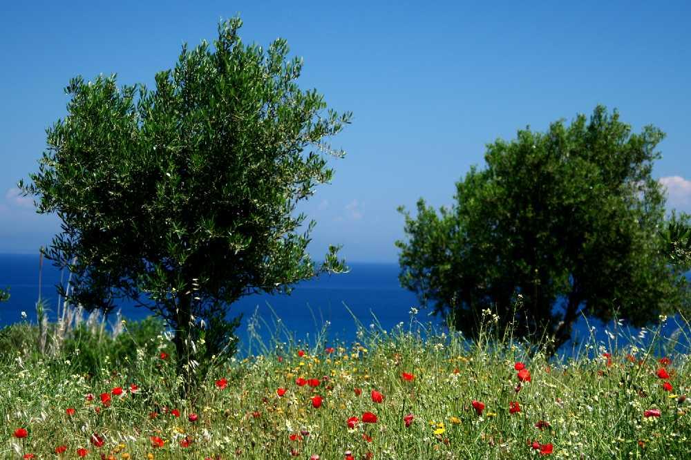 Mediteraner Meeresblick