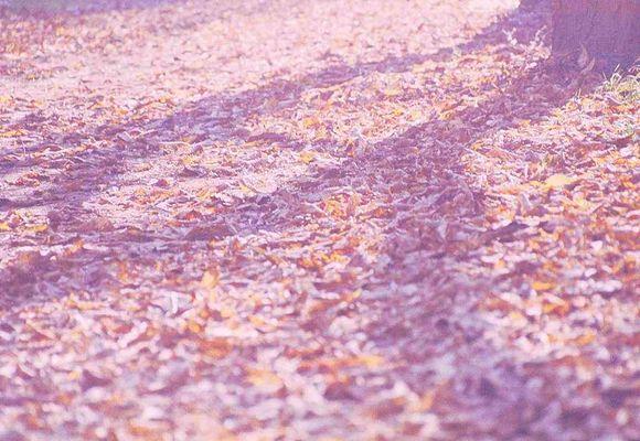 Meer von Blättern..