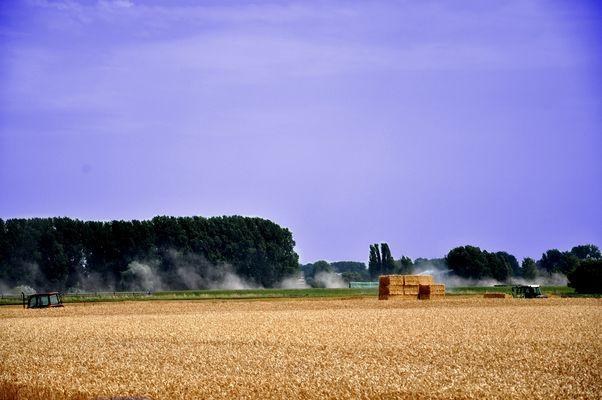 Meerbusch - Landwirtschaft I
