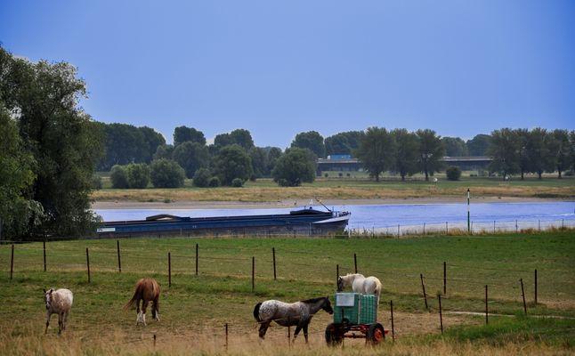 Meerbusch - Pferde, Rhein