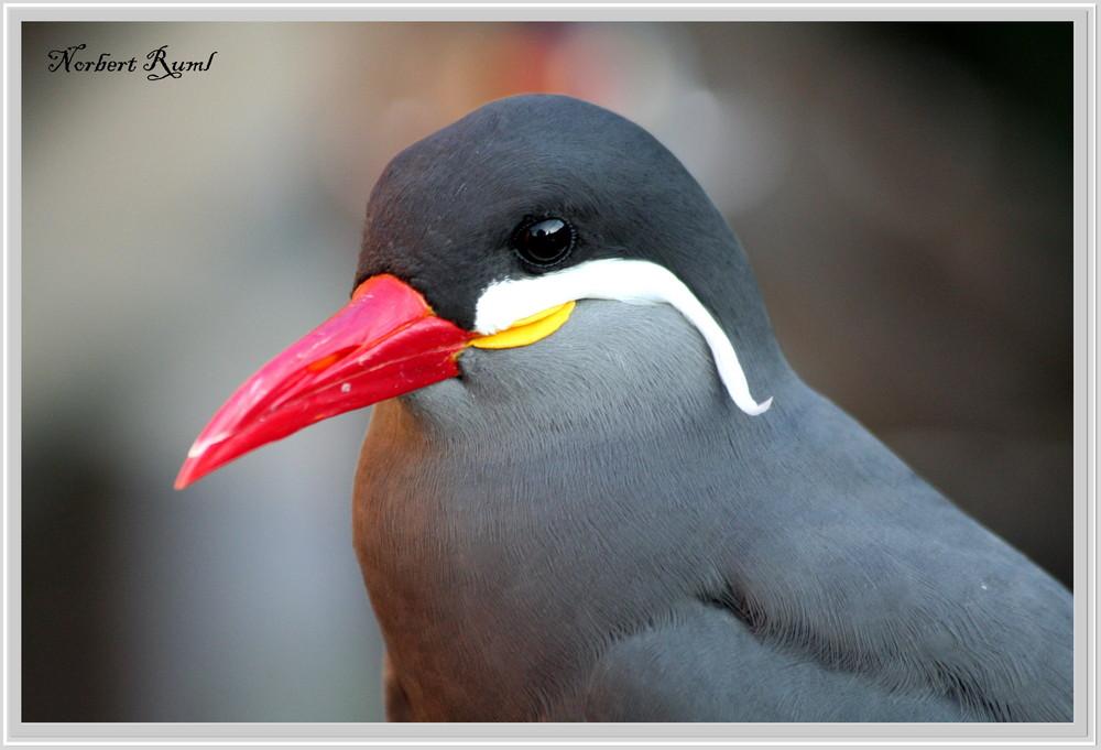 Meeresvogel