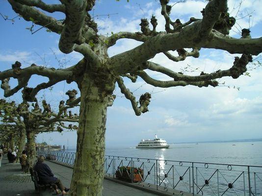 Meersburg - alte Bäume und schönes Schiff