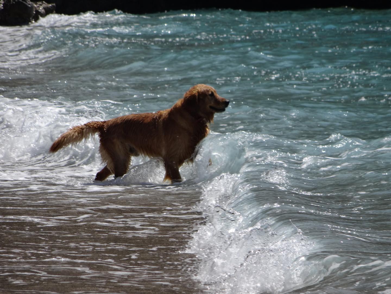 Meerwasserverrückter Hund :-)
