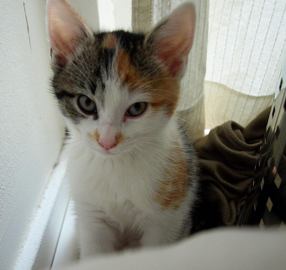 Meet Izzy !