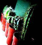 meet me in kaktus valley.